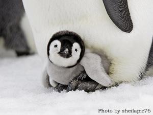 ペンギンのキャラクターについて