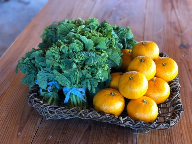 3月15日ミニSunday market やります。野菜農家「がんばれるごはん」さんのご紹介。